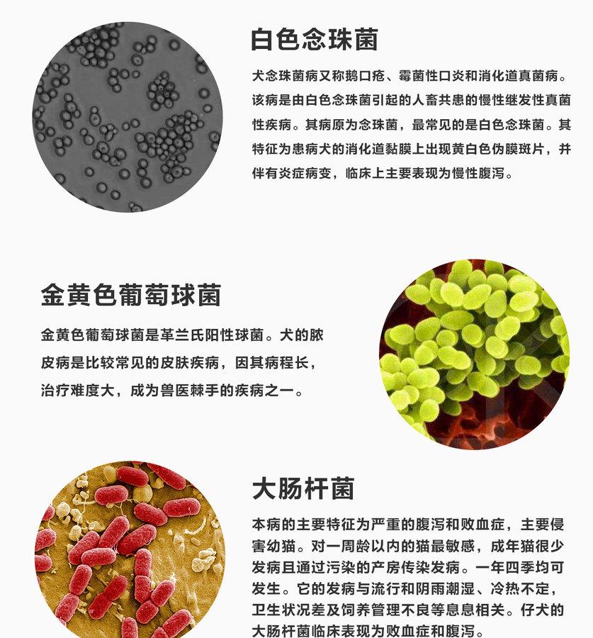 林蛙抗菌肽详情页3_04.jpg